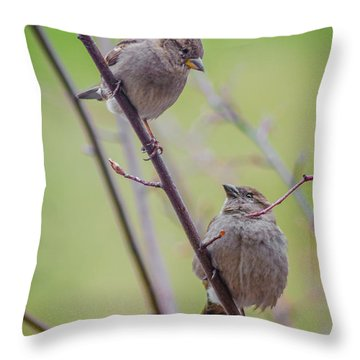 Conversation Of The Day Throw Pillow