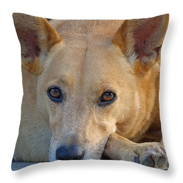 Cookie Chillin'  Throw Pillow