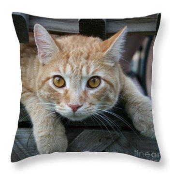 Cool Cat Named Calvin Throw Pillow