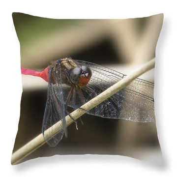 Cool Dragon Fly 0001 Throw Pillow by Kevin Chippindall