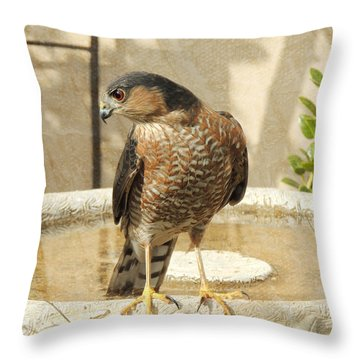 Cooper's Hawk At The Bird Bath Throw Pillow