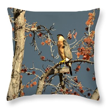 Cooper's Hawk Catches Sun In Stormy Sky Throw Pillow by Susan Wiedmann