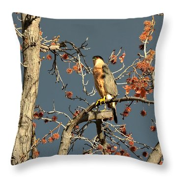 Cooper's Hawk Catches Sun In Stormy Sky Throw Pillow