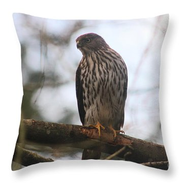 Cooper's  Hawk Dines Here Throw Pillow by Kym Backland