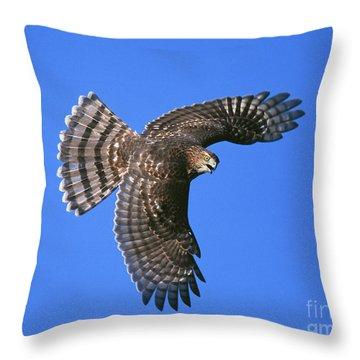 Coopers Hawk Throw Pillow by Jim Zipp