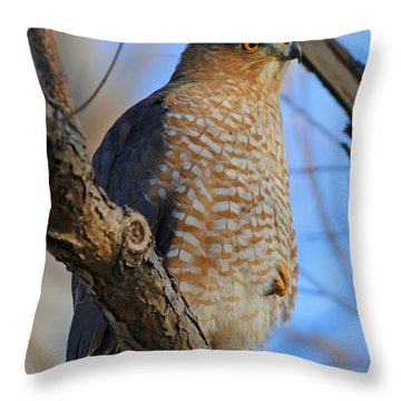 Cooper's Hawk Series 1 Throw Pillow