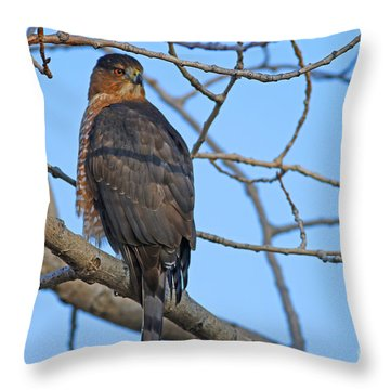 Coopers Hawk Series Three Throw Pillow