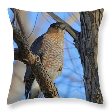 Coopers Hawk Series Two Throw Pillow