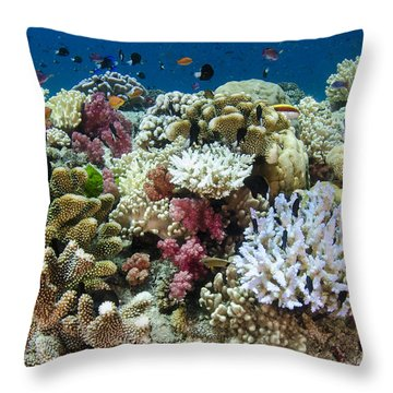 Coral Reef Diversity Fiji Throw Pillow