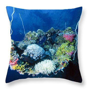 Corals On Ship Wreck Throw Pillow