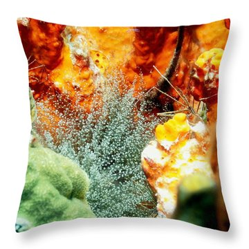 Throw Pillow featuring the photograph Corkscrew Anemone Grove by Amy McDaniel