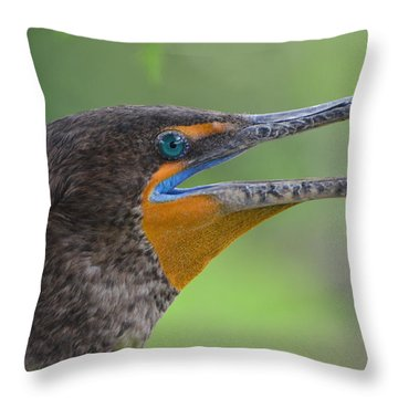 Cormorant Close Up Throw Pillow by Jodi Terracina