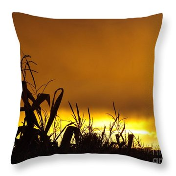 Corn At Sunset Throw Pillow