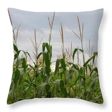 Throw Pillow featuring the photograph Corn Field by Laurel Powell