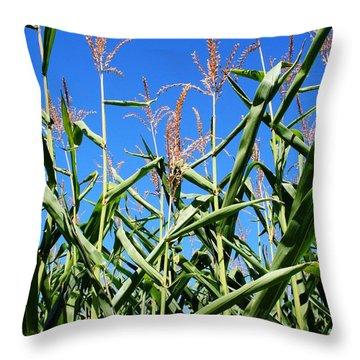 Corn Field Rural America Throw Pillow by Heather Allen