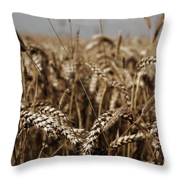 Throw Pillow featuring the photograph Corn Field by Vicki Spindler
