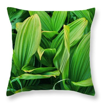 Corn Lilies Glacier National Park Throw Pillow by Rich Franco