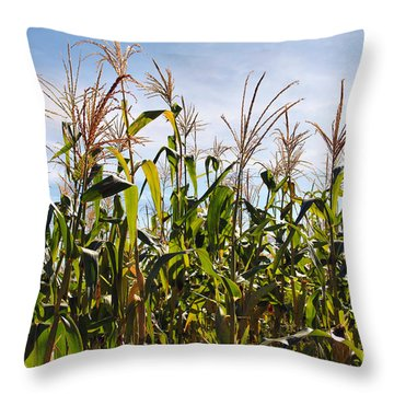 Corn Production Throw Pillow by Carlos Caetano