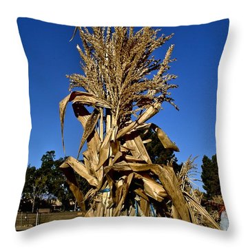 Throw Pillow featuring the photograph Corn Stalk by Michael Gordon
