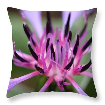 Cornflower Bloom Throw Pillow by Mark Severn