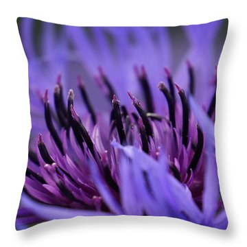 Throw Pillow featuring the photograph Cornflower by Inge Riis McDonald