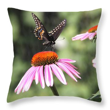 Cornflowers With Black Swallowtail  Throw Pillow by Yumi Johnson
