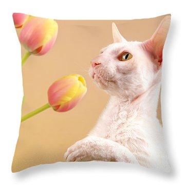Cornish Rex Cat Throw Pillow by Verena Matthew