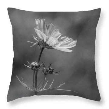 Throw Pillow featuring the photograph Cosmo Flower Reaching For The Sun by Debbie Green