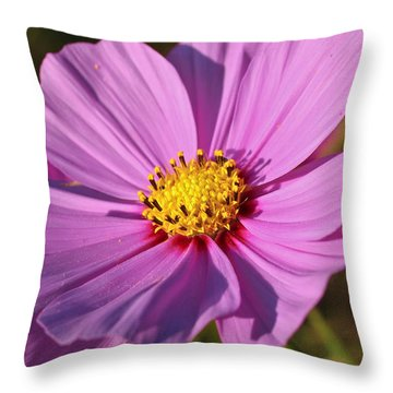 Cosmos Love Throw Pillow