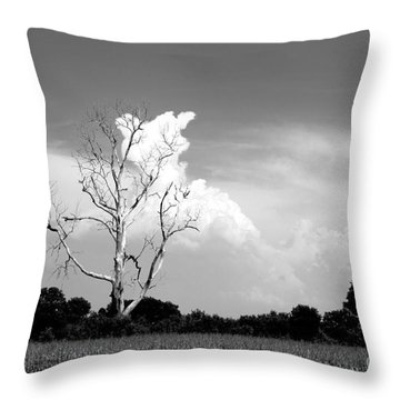 Cotton Candy Tree - Clarksdale Mississippi Throw Pillow