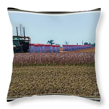 Cotton Harvest Throw Pillow by Debbie Portwood