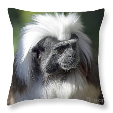 Cottontop Tamarin Saguinus Oedipus Throw Pillow