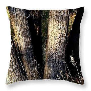 Cottonwood Tree Trunks Throw Pillow