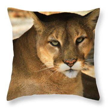 Cougar II Throw Pillow