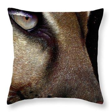 Cougar Throw Pillow by Jurek Zamoyski