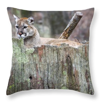 Cougar On A Stump Throw Pillow