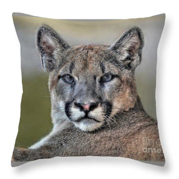 Throw Pillow featuring the photograph Cougar  by Savannah Gibbs