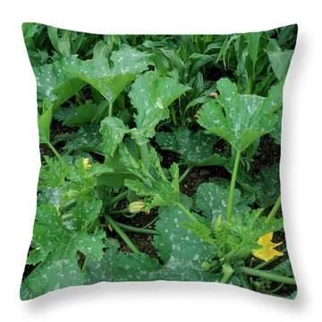 Cucurbita Throw Pillows