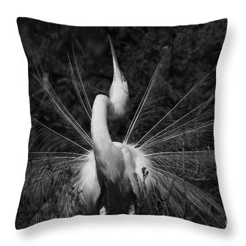 Throw Pillow featuring the photograph Great Egret Courtship Plumes  by John F Tsumas