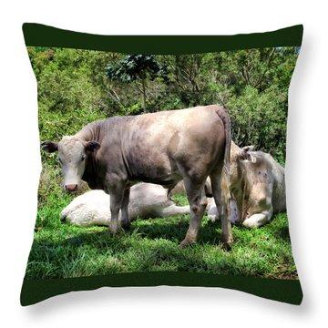 Throw Pillow featuring the photograph Cow 5 by Dawn Eshelman