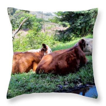 Throw Pillow featuring the photograph Cow 6 by Dawn Eshelman