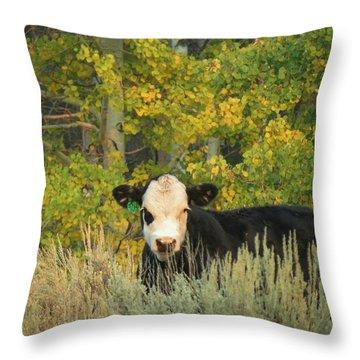 Cow #904 In Aspen Grove Throw Pillow by Feva  Fotos