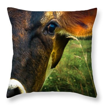 Cow Eating Grass Throw Pillow