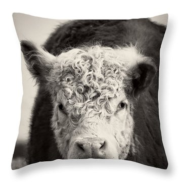 Cow Throw Pillow by Edward Fielding