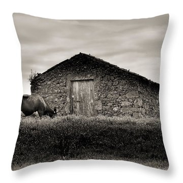Cow Grazes At Rustic Barn  Throw Pillow