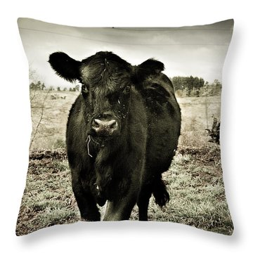 Cow In The Winter Pasture  Throw Pillow by Gray  Artus
