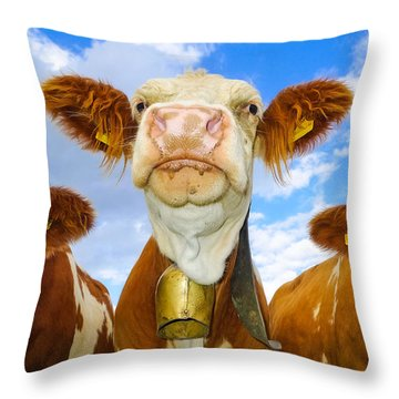 Cow Looking At You - Funny Animal Picture Throw Pillow by Matthias Hauser