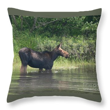 Cow Moose Breakfast Throw Pillow by Neal Eslinger