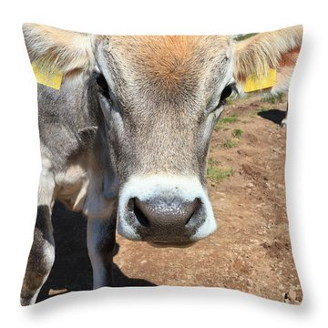 Cow On Alpine Pasture Throw Pillow