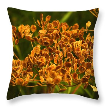 Throw Pillow featuring the photograph Cow Parsnip Seeds by Sandra Foster